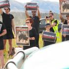 Just over 20 protesters from a group called Queenstown Animal Activists picketed Wanaka Rodeo...