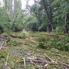 Trees down on Speargrass Flat Road, near Queenstown. Photo: Matt Pitt