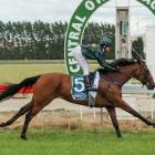 Daring tactics paid off for rider Tanya Yonker when she won the Clare Memorial Gold Cup with...
