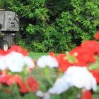 A council contractor mows the lawn at the Oamaru Public Gardens yesterday. Waitaki Mayor Gary...