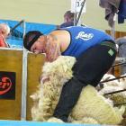Brett Roberts, of Mataura, is the 2019 Otago Open Shearing champion. Photo: Richard Davison