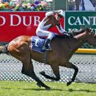 Casaquinman and rider Dylan Turner will seek more success at Riccarton racecourse tomorrow.PHOTO:...