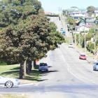 After gaining a reprieve earlier this year, nine sycamore trees at the entrance to Oamaru Harbour...