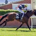 Orepuki Lad and Leah Hemi score comfortably in the listed Dunedin Gold Cup on Saturday. Photo:...