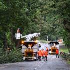 Queenstown Lakes District Council contractors deal to a tree on Centennial Ave, in Arrowtown,...