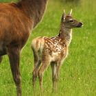 A dramatic increase in hind productivity has been reflected in recent agricultural statistics....