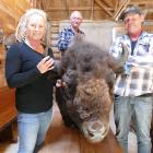 Nadia and Blair Wisely with Bobo the bison, their original sire. In the background is Bobo's...