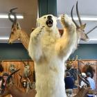 Among the lots, a giant polar bear sold for $33,000. PHOTOS: GREGOR RICHARDSON