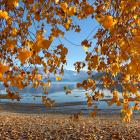 ''Autumn curtain - taken on April 19 while I was on holiday in Wanaka. Beautiful weather and...