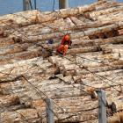 Export log prices are holding up at high levels. Photo: Stephen Jaquiery