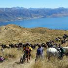 A bike rider threads through lunching horse-riders on the Grandview Doc track high above our...