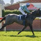 Emily Margaret's backers had little to worry about when she produced a big front-running win at...