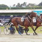 Majestic Man (6) fends off the challenge of Kings Landing to win the group 3 Southern Lights Trot...