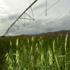 Otago irrigators want management of Otago's water to remain with the regional council. Photo by...