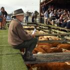 Waikawa farmer Maurice Yorke first attended stock sales in Owaka with his father in the 1940s....