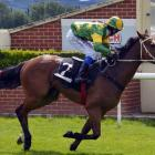 Jockey Corey Campbell  and Zabay win easily at the Wingatui meeting early last month. Photo:...