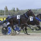 A G's White Socks (number 5) ends his season with a swooping win in the Rangiora Classic...