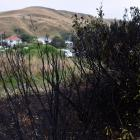 Vegetation burned during a late night fire at Ocean View on Friday night. PHOTO: PETER MCINTOSH