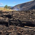 The aftermath of the out of control burn that scorched about 20ha near Lawrence. Photo: Richard...
