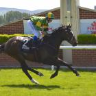 Gallant Boy was one of multiple winners for trainers Brian and Shane Anderton and jockey Corey...