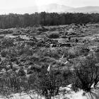 An archive photograph shows the view of a landfill site at Dunedin's Ocean Beach domain, near...