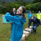 Billie Comer (13), of Queenstown, holds a box of South Island robins before they are released in...
