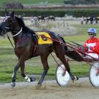 Get Lucky and driver Brad Williamson return to the winner's circle after success at Oamaru...