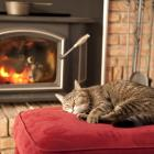 Cats tolerate you and really adore the armchair that is closest to the fire. Photo: Getty Images