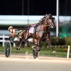 Champion pacer Lazarus will stand at Yirribee Pacing Stud after the NSW Harness Racing Club...