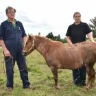 After being stabbed in a vicious attack in his Waitati paddock at midnight on Sunday, miniature...