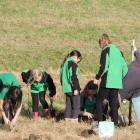 Volunteers from Maheno and Kakanui Schools, plus Kakanui community members, plant out both the...