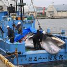 Workers prepare to unload a Minke whale from a commercial whaling boat at a port in Kushiro,...