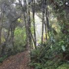 The tranquil bush of Orokonui Ecosanctuary. Photo: Alister Robinson