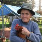 Minni Gordon of Haruru with Joey and other surviving chickens after a series of dog attacks....