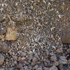 More than 1000 teeth were found at an Invercargill building site. Photo: Supplied
