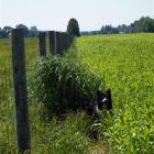 Sustainable farming practices such as planting drought-proof, deep-rooted native prairie grasses...