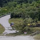 The willow that fell near the Shotover River. Photo: ODT files