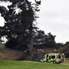 A Dunedin arborist was able to climb down from a tree he was working on at Chisholm Links after a...
