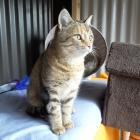 One of the charity's rescued cats. Photo: Supplied