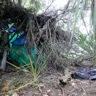 """Branches and scraps of tarpaulin form what appears to be a homeless person's now-abandoned """"bivvy..."""