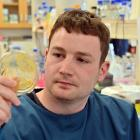 Researcher  Liam Harold examines a petri  dish  in a laboratory in the University of Otago...