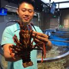 Fresh NZ crayfish is offered at a Hema store in Shanghai. Photo: ODT files