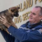 Inspector Todd Southall with one of puppies bred at the NZ Police dog training centre at Trentham...