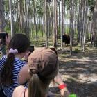 Yellowstone bison headed for Instagram. Photo: NZ Young Farmers