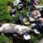 Angel the cat with part of her haul. Photo: Supplied