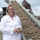 Charlotte Bowen checks out some potatoes at the Washdyke factory. Photo: Chris Tobin