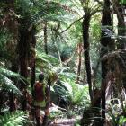 Forest & Bird South Otago chairman Roy Johnstone explores the ''magical'' Lenz Reserve in the...