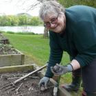 Waitahuna-Lawrence Garden Club secretary Margaret Healy plants seed potatoes in her Beaumont...