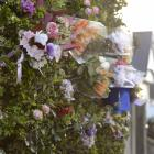 Flowers in the hedge outside the Dundas St flat where 19 year-old Sophia Crestani died after...