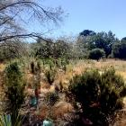 Restoration projects like the one at Kowhai Sanctuary in West Melton will help to create a...